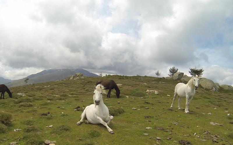 Korsika Mountainbiken mit outwärts